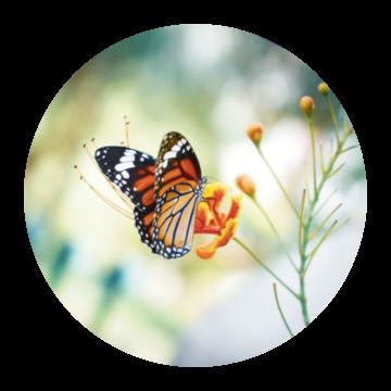 Intuïtief leven door Een Cursus in wonderen